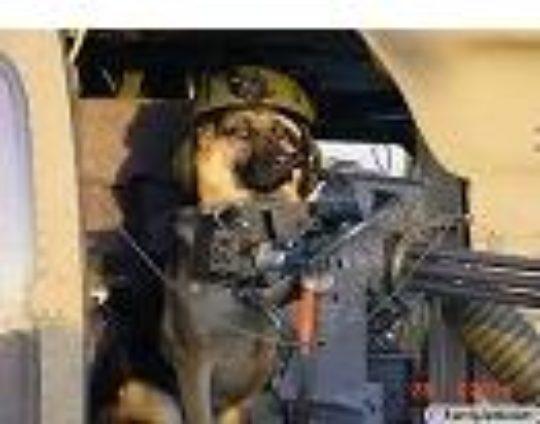 Psy, autá, zbrane a slobodný internet